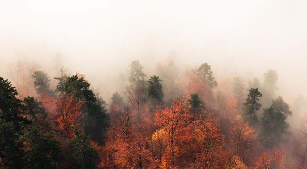 Co cichnie, gdy październik chodzi po kraju? Rozwiąż QUIZ o jesiennych przysłowiach!