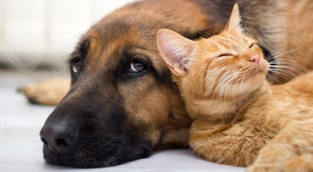 Przysłowia o psach i kotach. Czy je znasz? Z pewnością! QUIZ