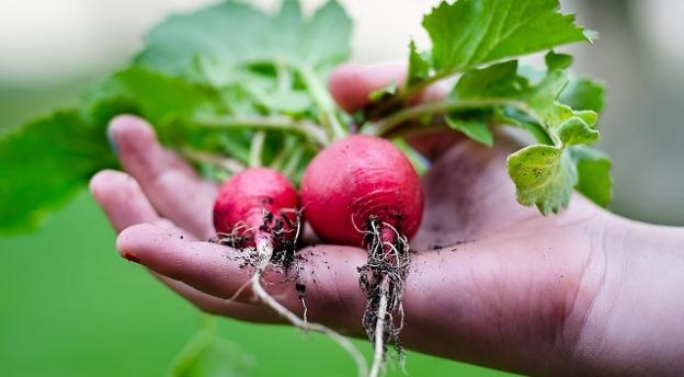 Dla mieszczucha to wyzwanie! Rozpoznasz popularne warzywa po liściach?