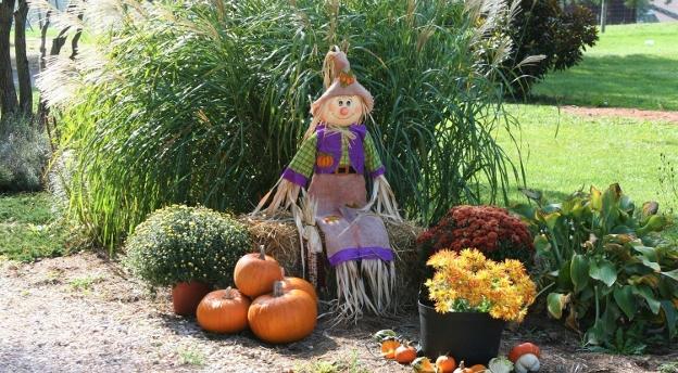 Uważasz się za dobrego ogrodnika? A wiesz, co trzeba zrobić jesienią? Sprawdź!