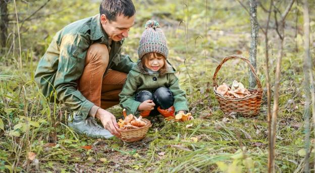 Uwielbiasz chodzić na grzyby? Spróbuj zebrać chociaż 10 dobrych odpowiedzi! TEST wiedzy o grzybach
