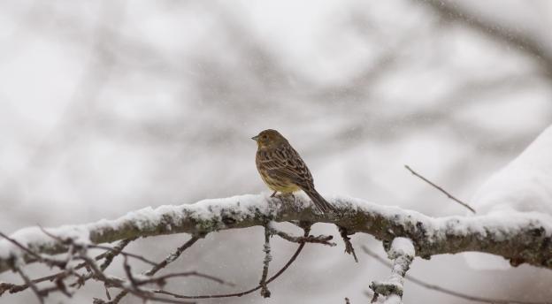 Czy znasz ptaki, które odwiedzają Twój ogród? Rozwiąż nasz QUIZ