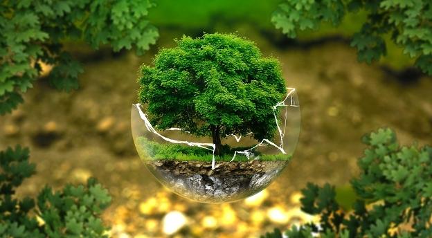 Jak dobrze znasz drzewa? Jesteś w stanie je rozpoznać po owocach i liściach? Sprawdź!