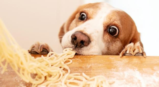 Czy twój pies może to zjeść? Jeśli masz pupila, musisz zdobyć komplet punktów! QUIZ