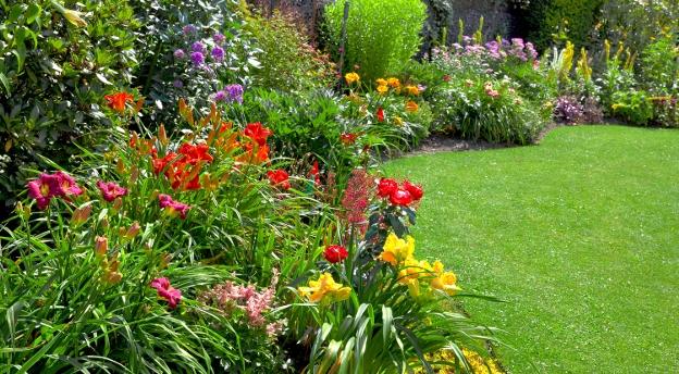 Czy Twój ogród mógłby Cię zabić? Sprawdź, czy znasz trujące rośliny ogrodowe