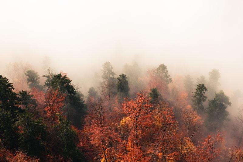 Dokończ przysłowie: Gdy jesień zamglona, zima...