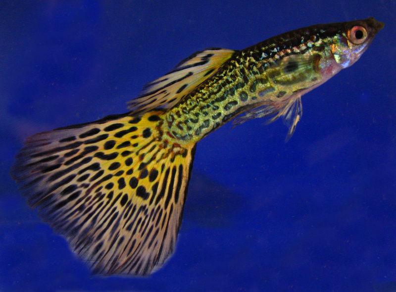 Jaki rodzaj ryby widoczny jest na zdjęciu?