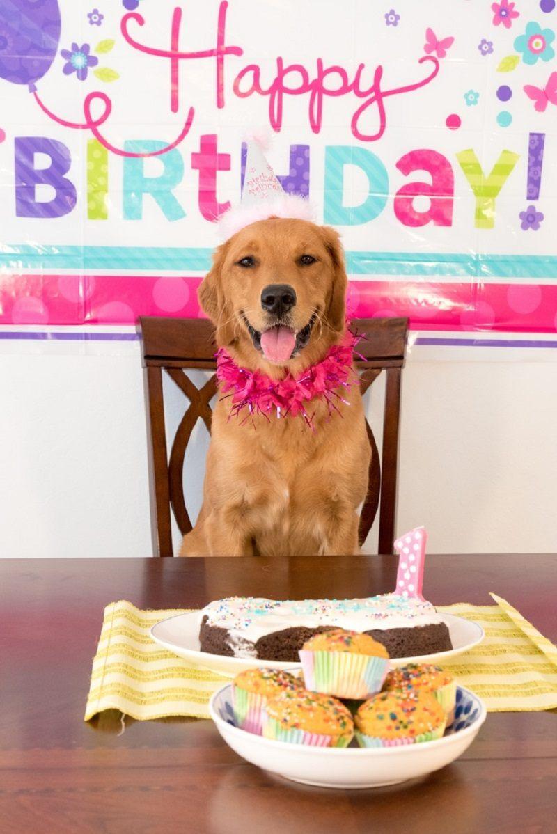 Czy zdarzyło ci się świętować urodziny psa?