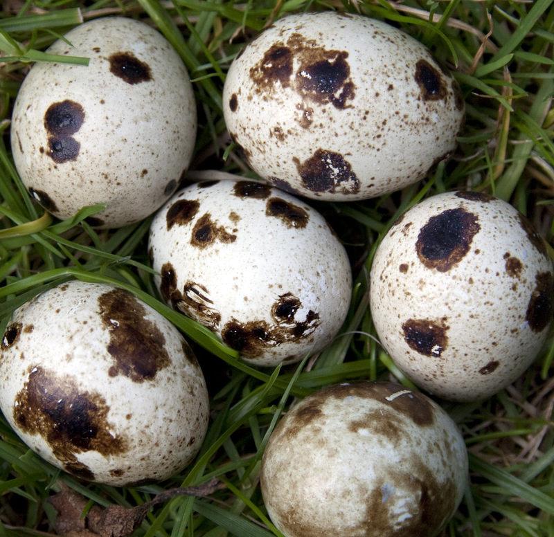 Co się może wykluć z tych jajek?