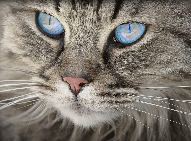 Jak określimy po włosku kota?