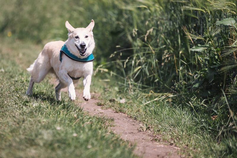 Jak wyobrażasz sobie aktywny poranek ze swoim psem?